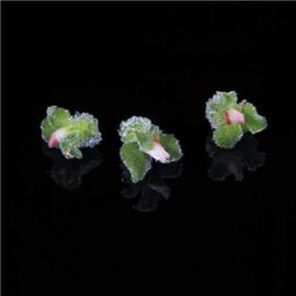 Blinq Blossom | Lichtgroen | Koppert cress | Teelt: schoon-Nl | bakje 2x 20stuks