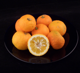 BITTERSINAASAPPEL | Sevilla sinaasappel | pomerans | ARANCE AMARE |  TEELT Biologisch | Spanje | 1KG
