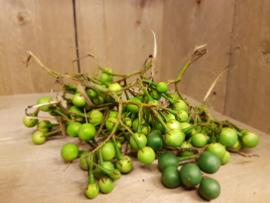 Aubergine / Tros-aubergine / wilde aubergine / bosaubergine / erwtenaubergine / Pea eggplant / Makhua Phuang / Dominicaanse Republiek / 250 gram