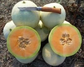Meloen / Varieteit: Meloni Lisci  (Lisci=glad) / extra zoet / Italië / 1 stuks