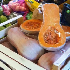 Zucche Lunghe / Lombardije | Per stuk (ca 3,5-4 kilo)