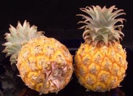 Ananas | Baby ananas / Mini ananas / teelt: regulier / Mauritius / 1 stuks