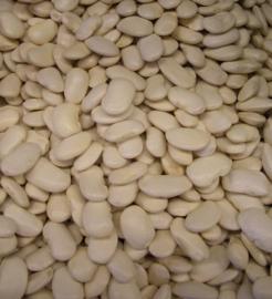 Corona Exra groot / Fagiolo Corona / Italië / Teelt: traditioneel /Oogstjaar 2020 / 0,5 kilo