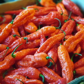 Ghost Chili Pepper Red / Naga Jolokia peper / Bhut Jolokia / Rood / Nederland / 50gram /