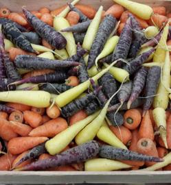 PEEN   CHANTENAY  WORTEL   peen mix / mix: Wit en Oranje TEELT REGULIER-FRANKRIJK   500gram
