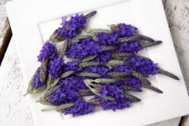 Lavendel bloemen /eetbare bloemen / schoon geteeld - Israel / 4 bakjes (ca. 80 stuks)