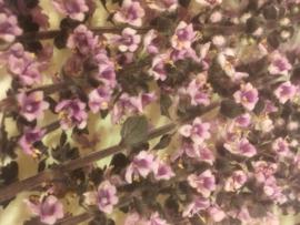 Zalotti Blossom | Koppert cress - NL | Bakje 2x150 stuks