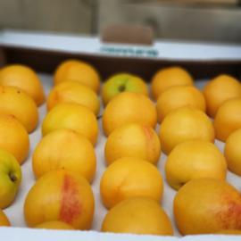 Nectacot | Teelt regulier - Zuid-Afrika | doos 2,5 kilo (ca 20stuks)