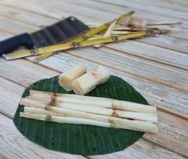 Suikerriet / Sugar cane / Rietsuiker / Costa Rica / 1 stok