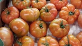 Rebellion tomaten / TEELT: BIO- NL / 500GRAM