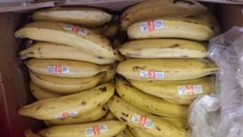 Banaan / Bakbanaan / grote bakbananen / teelt: regulier / Ecuador / 1 kilo