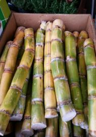 Suikerriet / Sugar cane / Rietsuiker / Costa Rica / doos 4kg (8-10 stengels)