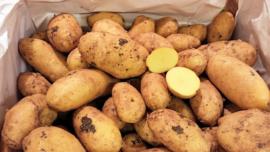 Aardappelen    Annabelle aardappel / Duitsland/ Teelt: regulier / vastkokend / 2,5 KILO