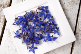 Borage bloemen /eetbare bloemen / schoon geteeld - Nederland / 4 bakjes (ca. 80 stuks)