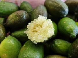 Fingerlime | Lime kaviaar | rond / Marokko / Fingerlime / citrus kaviaar / Kleur: pale-green/ Doos 1 kilo