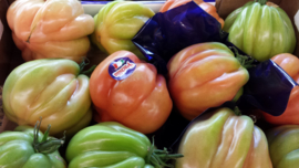 Tomaat / Pomodori Cuore di Bue tomaten / Italie-Ligurië / 500gram (ca 2-3 stuks)