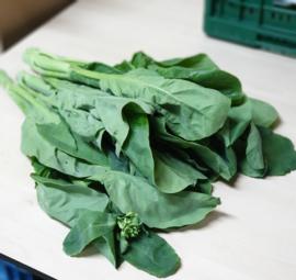 Kailan | Chinese broccoli | Teelt regulier - NL | kist 6 kilo