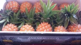 Ananas | Baby ananas / Mini ananas / teelt: regulier / Mauritius / doos 10 stuks - 3,5kg