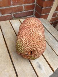 Cempedak | small Jackfruit | Thailand  | Teelt permacultuur / per stuk ca 2kilo / Levering vanaf donderdag  3 oktober