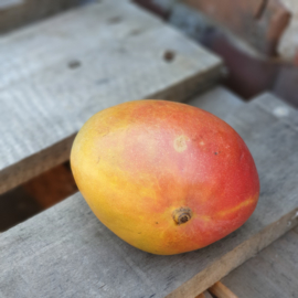 MANGO READY TO EAT | EETRIJP - CHILI | PER STUK (CA 400GRAM)