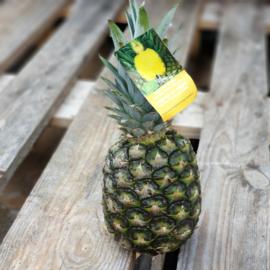 Ananas kleine maat | Teelt: bio - Costa Rica \ 1 stuks