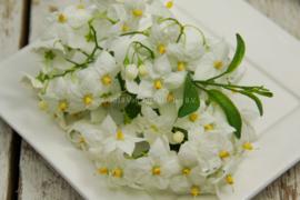 Jasmijn bloemen / eetbare bloemen / schoon geteeld - Israel / 4 bakjes (ca. 80 stuks)