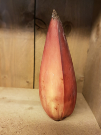 Bananenbloem | Verse bloem van de bananenplant | 1 stuks (ca 200-300gram)