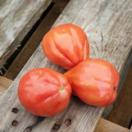 Coeur de Boeuf tomaten / Vleestomaat / Nederland / teelt: Bio-Demeter/ 1 kilo
