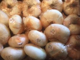 Giarratana | zoete grote uien / Italië / 1 STUKS (groot)
