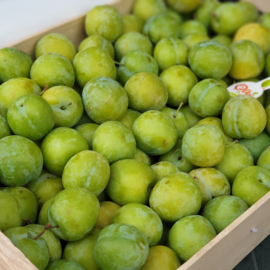 Reine Claude Verte groene pruimen / Spanje / 500gr
