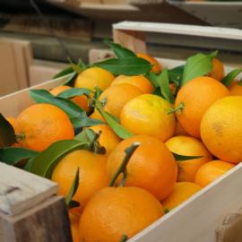 Mandarijn | Clementine met blad | Calabrië | 1 Kilo