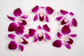 Orchideeën / Karma / eetbare bloemen | Thailand | 6 Schaaltjes (6x8 stuks)