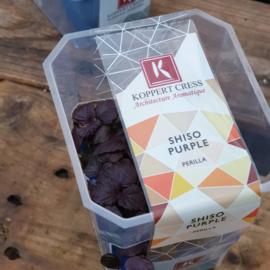 Shiso Purple  | Koppert Cress - NL | 1 stuks