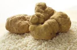 Truffel Wit | Witte Truffel | bianco d'alba' | prijs op aanvraag