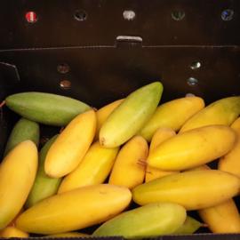 Curuba / banana passionfruit / tasco / tumbo / teelt: regulier / Colombia / doosje ca 1,4 kilo (ca 12-16 stuks)