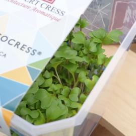 Brocco cress | Koppert Cress - NL | 12 stuks