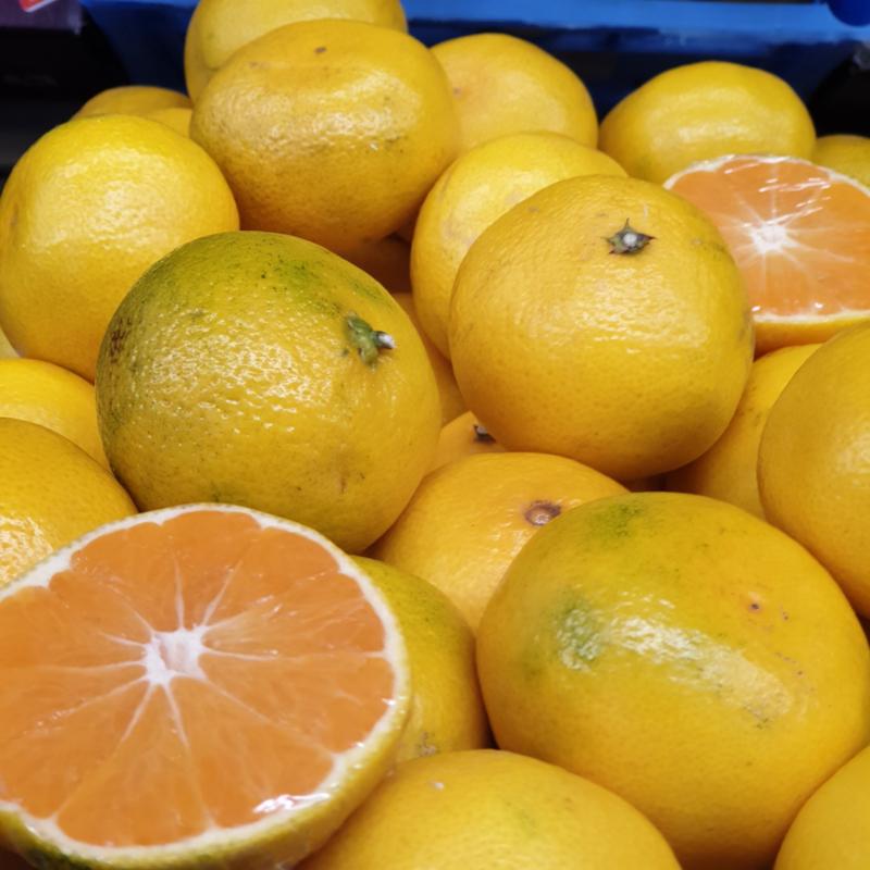 Satsuma mandarijn / Satsuma  / PERU / kist 10 kilo ( 80 stuks)