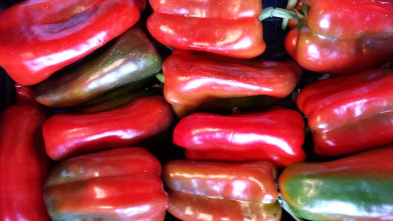 Paprika, rood van Sicilië |  Peperoni rosso  / 1stuks (groot)
