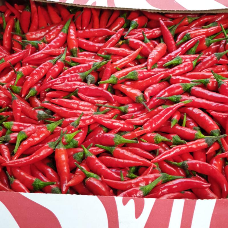Rawit rood / kleine pepertjes / mini pepers / extra  heet / teelt: regulier - Senegal  / 100gram (ca 15-20 stuks)