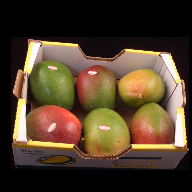 Tommy Atkins mango | tussen onrijp-medium rijp | Teelt: Regulier -  Brazilie | doos 7 stuks (4 kilo)