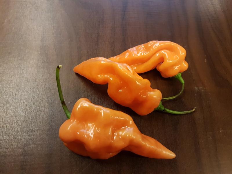 Habanada Peper Oranje   Haba-nada, Niet scherpe pepers!    Scolville 0   200gr