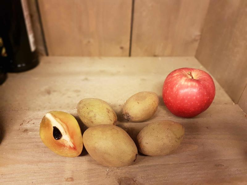 Sapodilla / Sapotille / Sawo / Sapote /Chico fruit / Breiapfel  / Westindische mispel /  Thailand / teelt: Permacultuur / 500gram