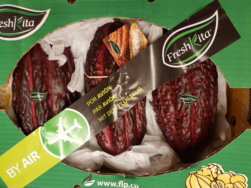 Cacaovruchten / cacaopeulen / cacao vers / Cabosse / teelt: regulier / variëteit Trinitario - Ecuador /  doos 3 kilo (ca 2-4 stuks afhankelijk van de grootte)