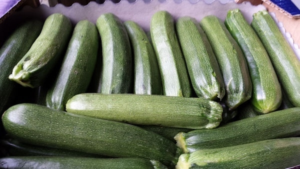 Klein en Jong / Jonge courgette | Zucchine lunghe / talië / 500gram (ca 2-3 stuks)
