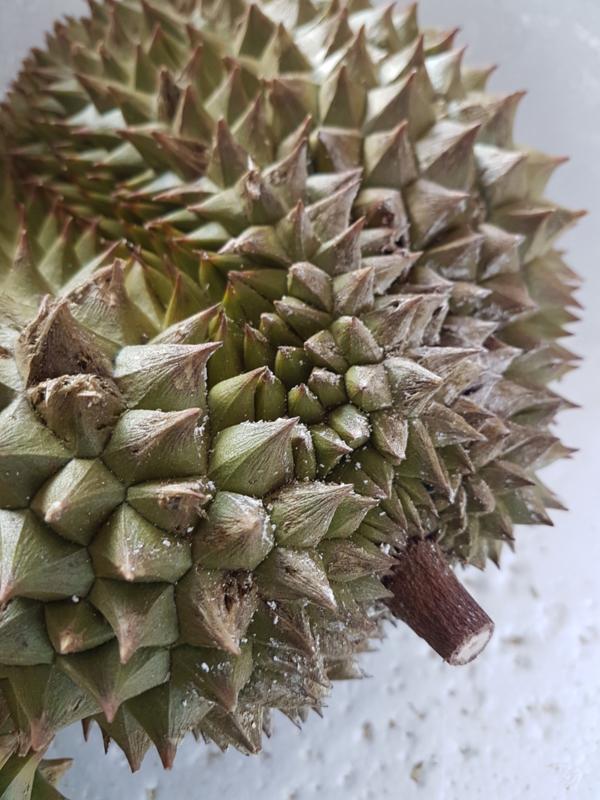 Doerian Krathum | verse durian | Thailand | maart-april | per stuk (ca 1kg) / tijdelijk geen levering vanwege corona crisis