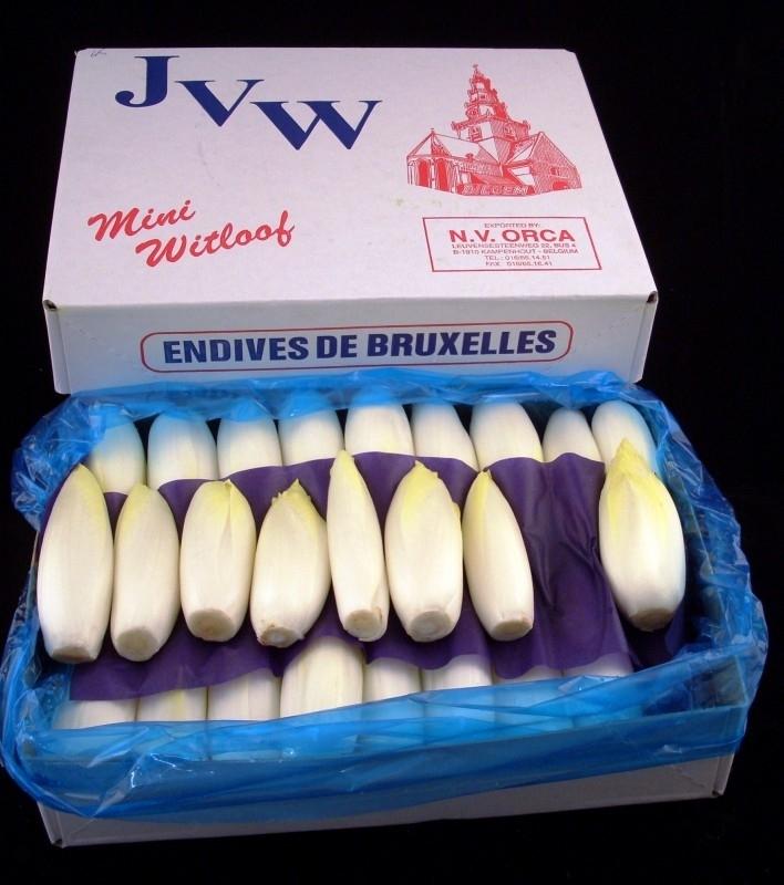 Witlof / Brussels mini witloof  / België / 500gram  (ca 10 stronkjes)