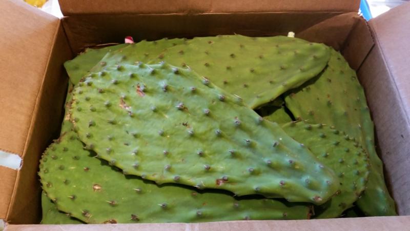 Cactusbladeren / Vers cactusblad / Nopales Crudos | Cactus Peddle | Mexico | 3,5 kilo