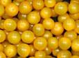 Cherry Geel / Gele Cherry tomaten /  / Spanje / teelt: regulier / bakje 250gram
