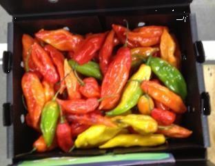 Peper / Limo pepers / Aji limo / Peru / oranje / 200gram (5-6stuks)