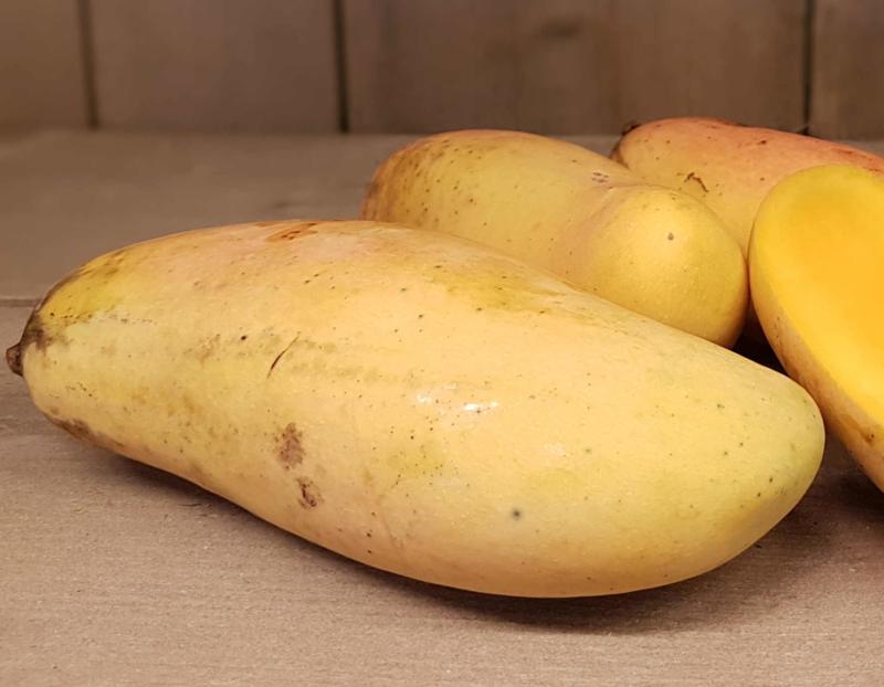 Mango Maha Chanok | Rainbow mango | Teelt: permacultuur - rijpgeplukt | Thailand | per stuk (ca 300-400gram) / Levering vanaf vrijdag 10 april